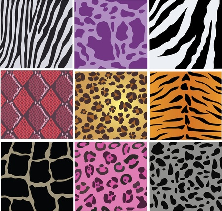 vector animal and snake skin Vector