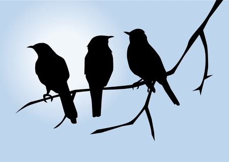 vector birds silhouettes on the branch Illustration
