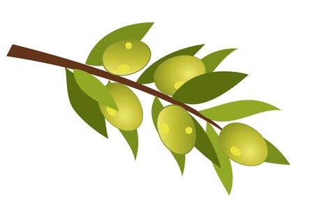 tuscany: vector olive branch with olives