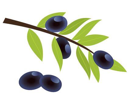 vector olijftak met olijven