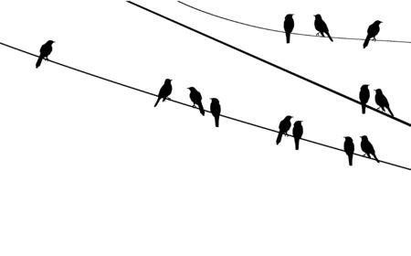 vector birds on wire Vector