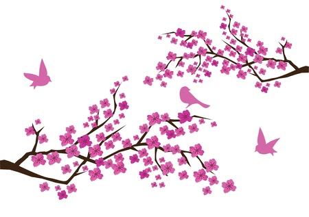 Flor de ciruelo con aves Foto de archivo - 9580030