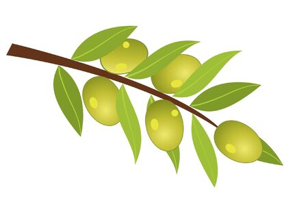 vector olive branch with olives Фото со стока - 9692249