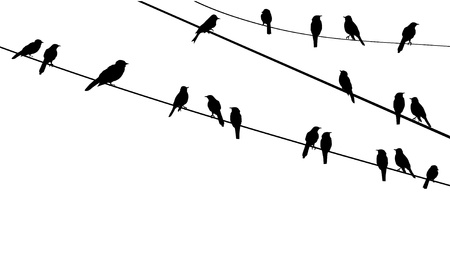 flock of birds: birds on wire