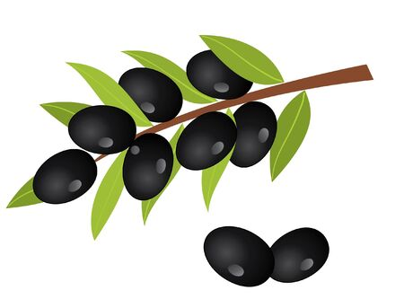 olive branch with olives Vector