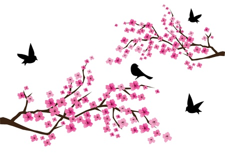 vector cherry blossom with birds Stock Vector - 9637240