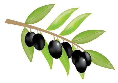 vector olive branch with olives