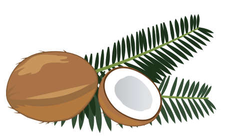 distillery: vector coconuts with palm leaves