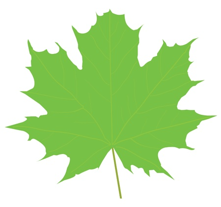 fall of the leaves: vector maple leaf