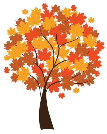 maple tree Stock Vector - 9732984