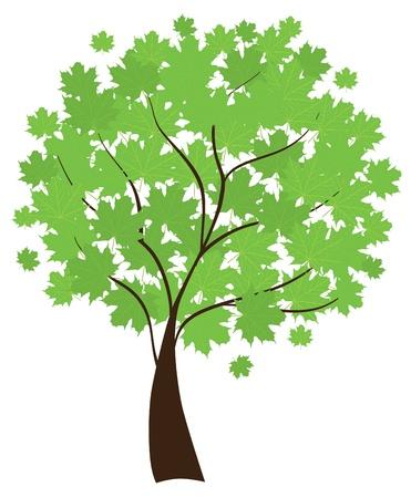 maple tree Stock Vector - 9732983