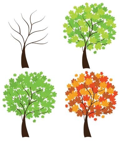 outline drawing: quattro alberi di acero di stagione