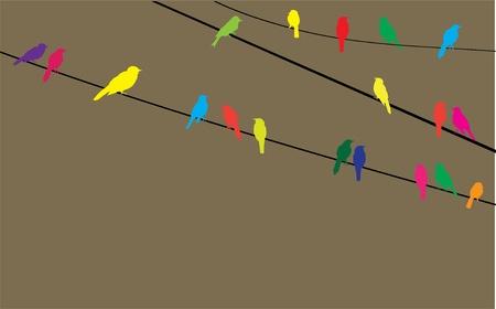 орнитология: вектор птицы на проводе