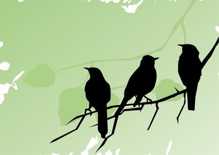 bandada pajaros: vector de aves