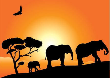 silhouettes of elephants over orange background Vector