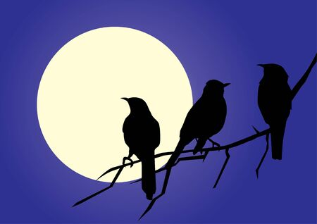 silhouettes: vector birds silhouettes Illustration