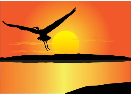 bird over sunset Vector