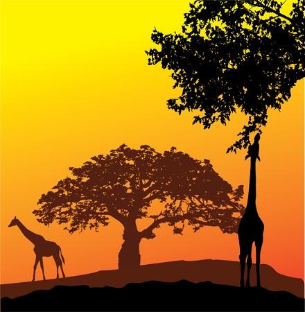 Vecteur silhouettes girafe Banque d'images - 11673629