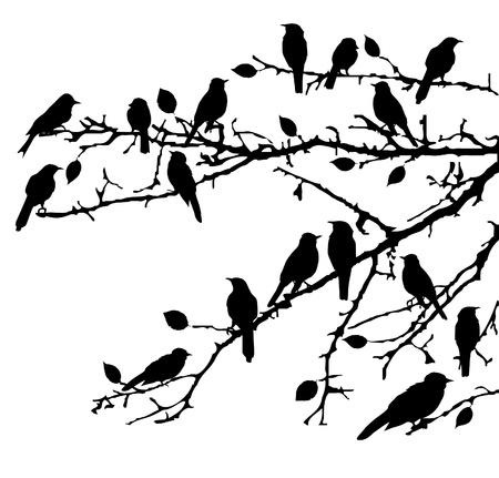 vector birds on the branches 일러스트