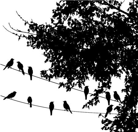 ワイヤ上のベクトルの鳥  イラスト・ベクター素材