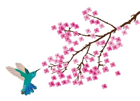 humming: hummingbird Illustration