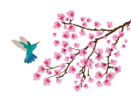 hummingbird and floral branch Vector