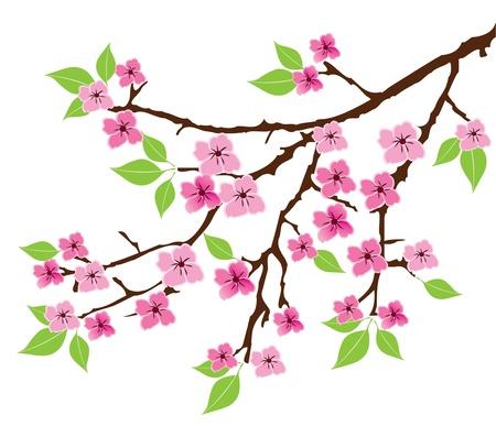 vector, boom, tak met bladeren en bloemen Stock Illustratie