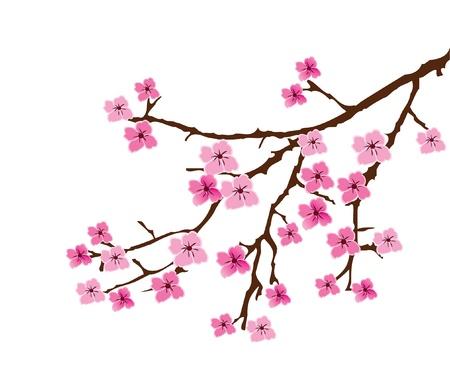 복숭아: 벡터 꽃 분기 일러스트