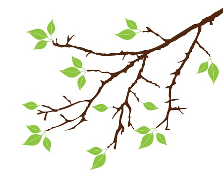 tree silhouettes: vector tree branch with leaves Illustration