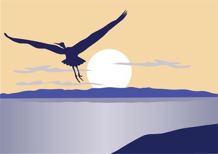 vector flying bird
