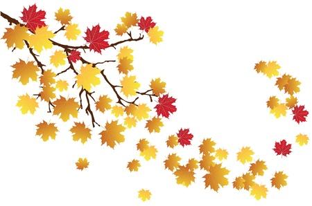 vector fall branch Illustration
