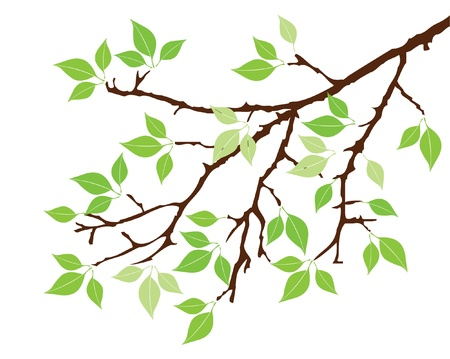 solitary tree: vector tree branch with leaves Illustration