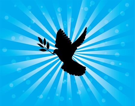 paloma blanca: vector paloma con rama de olivo