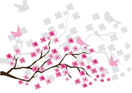 Cherry blossom illustration Illustration