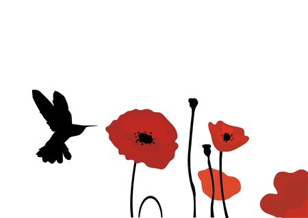 vector hummingbird and poppies