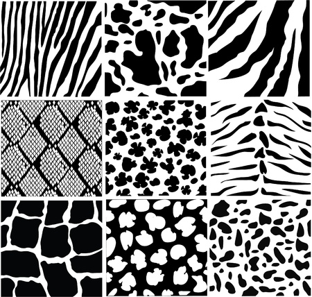 zebra pattern: vector black and white skin Illustration
