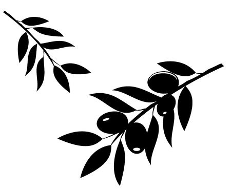 vector olive branches silhouette Vectores