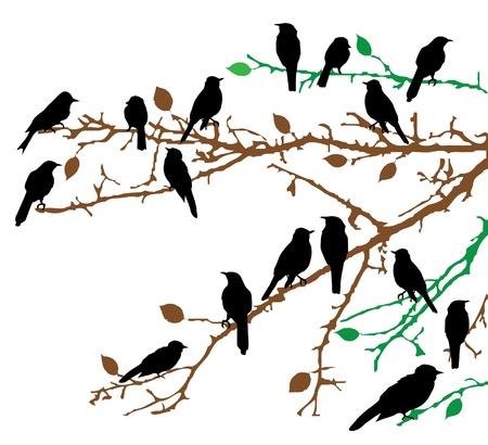 bandada pajaros: aves de vectores en las ramas