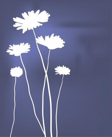 vector white camomiles card