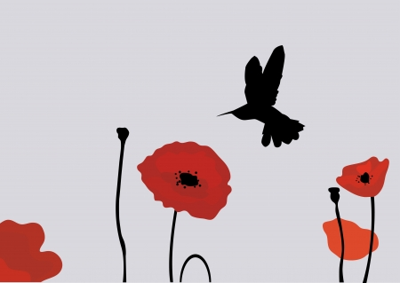 vector hummingbird and poppies Vector