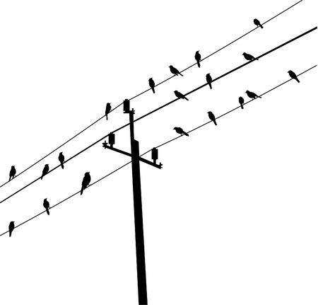 電気郵便上の鳥