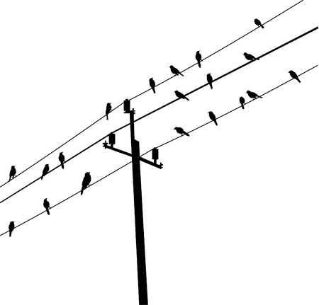 birds on electric post Vector
