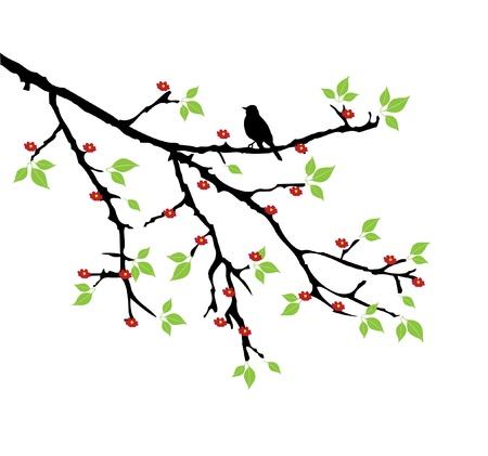 flor de durazno: vector rama de un árbol con flores y una silueta del pájaro
