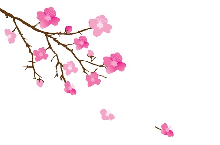 sakura flowers: vector cherry blossom Illustration