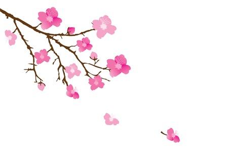 ramo di ciliegio: vettore fiore di ciliegio