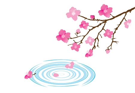 vector cherry blossom and water circles