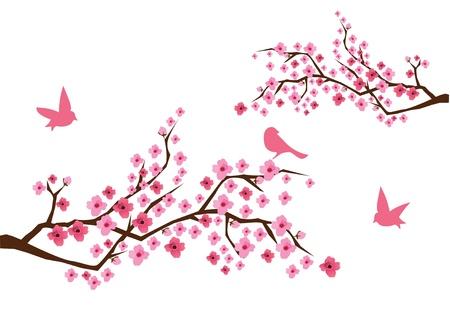 fleur cerisier: cherry blossom