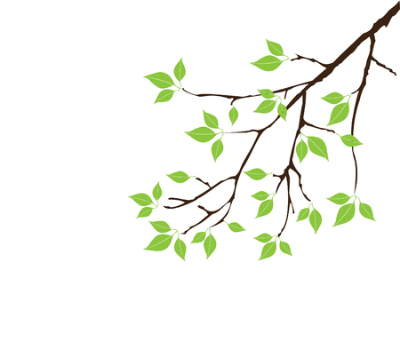 tree isolated: vector tree branch with leaves Illustration