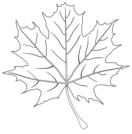 vector maple leaf outline Ilustrace