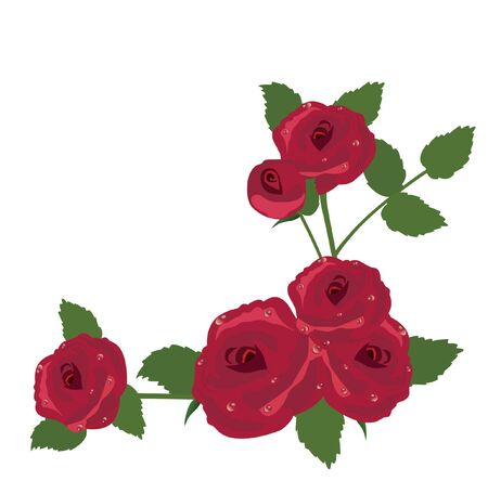 red rose: vector red rose frame Illustration